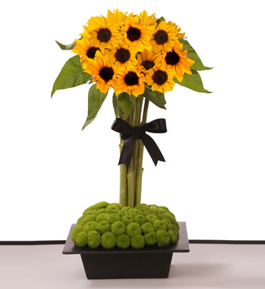 Meant to Shine- Flowers & Gifts Delivery Amman Jordan